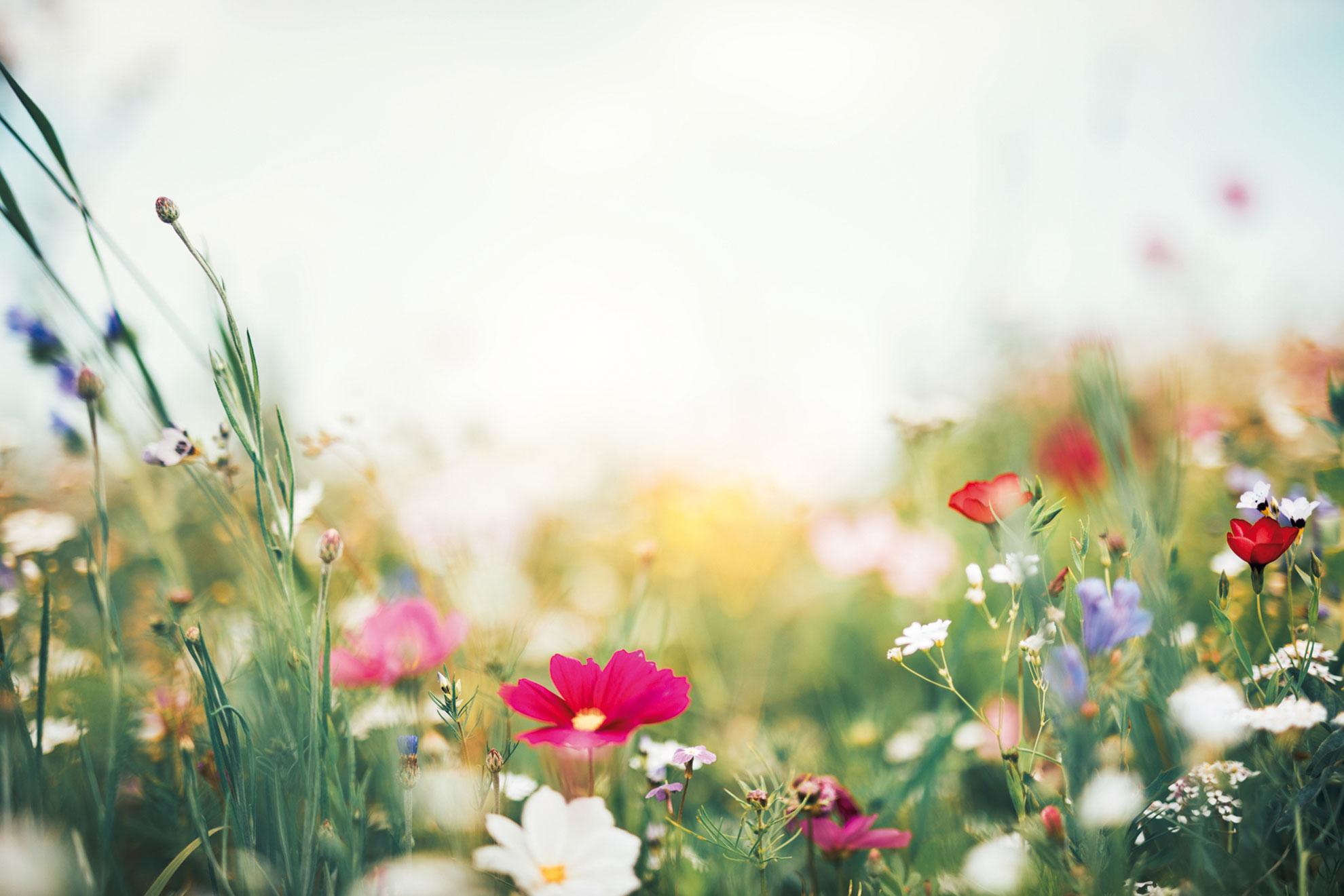 Werden auch Sie zum Blütenfreund!